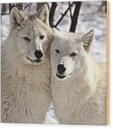Arctic Wolves Close Together In Winter Wood Print
