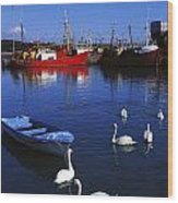 Ardglass, Co Down, Ireland Swans Near Wood Print