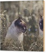 Are You Dreaming About Me - Siamese Feral Cat Wood Print