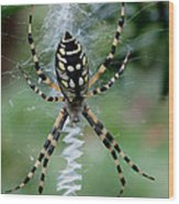 Argiope Aurantia Wood Print by Sean Green