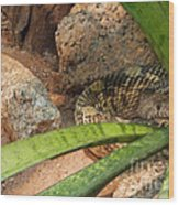 Arizona Rattler Wood Print
