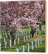 Arlington Cherry Trees Wood Print