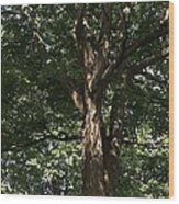 Art In The Park Wood Print
