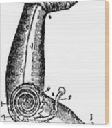 Artificial Arm Designed By Ambroise Wood Print by Science Source