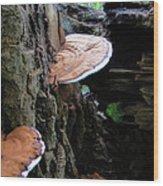 Artist Conk Mushroom  Wood Print