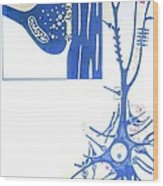 Artwork Of A Nerve Cell Of The Brain & A Synapse Wood Print