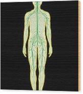Artwork Showing The Human Nervous System Wood Print