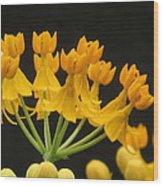 Asclepia Wood Print