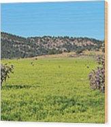 Ash Creek Valley II Wood Print
