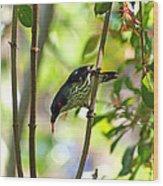 Asian Glossy Starling Wood Print