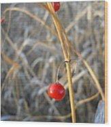 Asparagus Berries Wood Print
