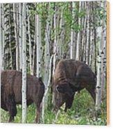 Aspen Bison Wood Print