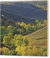 Aspen Bluffs In Autumn Colors Wood Print