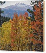 Aspen Grove And Pikes Peak Wood Print