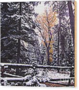 Aspen In Snow Wood Print by Barry Shaffer
