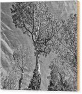 Aspen In The Sky Bw Wood Print