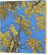 Aspen In The Sky Wood Print