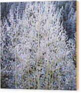 Aspen Lace Wood Print