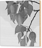 Aspen Leaves In Black And White Wood Print