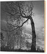 Aspen Silhouette Wood Print