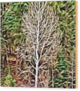 Aspen Tree On A Forest Road Wood Print
