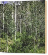 Aspen Trees - Vail Wood Print