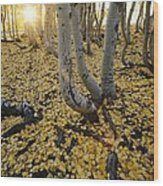 Aspen Trees Stand Above A Carpet Wood Print