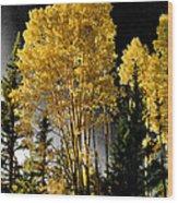 Aspens 2 Wood Print