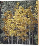 Aspens In Color Wood Print