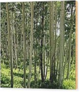Aspen's Pride Wood Print