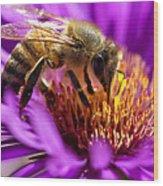 Aster Bee Wood Print