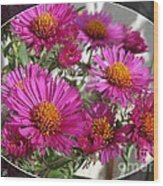 Aster Named September Ruby Wood Print