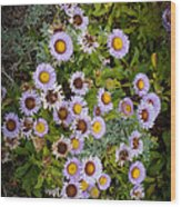 Aster On The Beach Wood Print