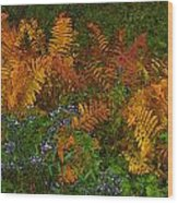 Asters And Ferns Wood Print
