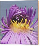 Asters Starting To Bloom Close-up Wood Print