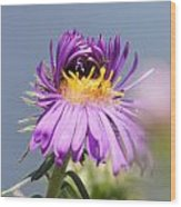 Asters Starting To Bloom Wood Print