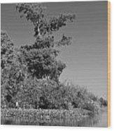 Atchafalaya Basin 25 Wood Print