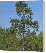 Atchafalaya Basin 42 Wood Print