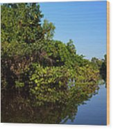 Atchafalya Basin Wood Print