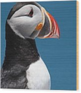 Atlantic Puffin Wood Print