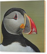 Atlantic Puffin Portrait Wood Print