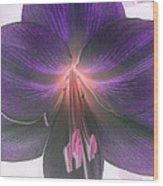 Aubergine Amaryllis Wood Print