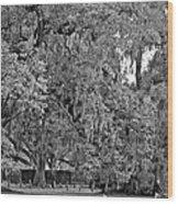 Audubon Park 2 Monochrome Wood Print