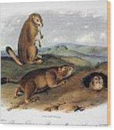 Audubon: Prairie Dog, 1844 Wood Print