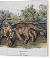 Audubon: The Cougar Wood Print