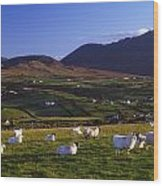 Aughrim Hill, Mourne Mountains, County Wood Print