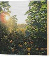 August Sunrise In The Garden Wood Print