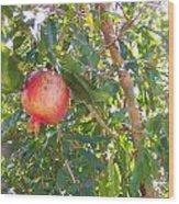 Aunt Tissy's Pomegranate Tree  Wood Print
