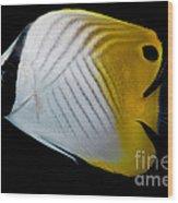Auriga Butterfly Fish Wood Print
