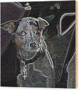 Australian Cattle Dog Sheltie Mix Wood Print